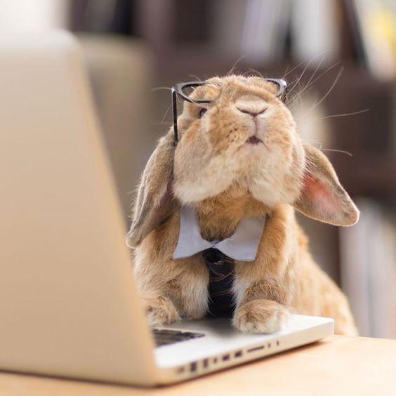 bunny photoshoot