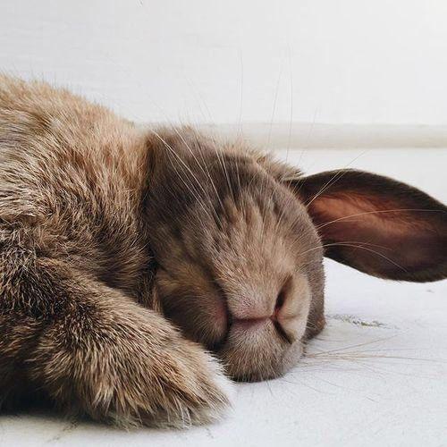bunny sleeping left side