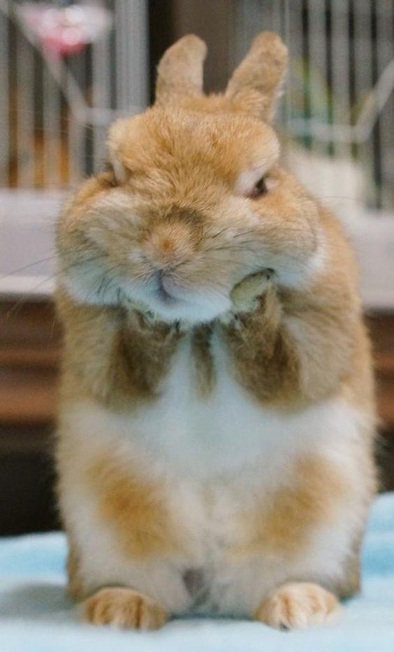 bunny eat a lot