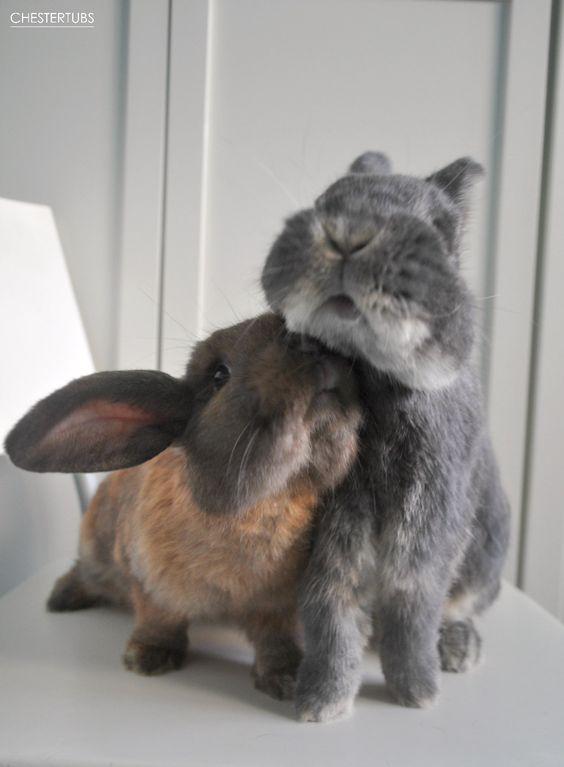 hugs rabbits