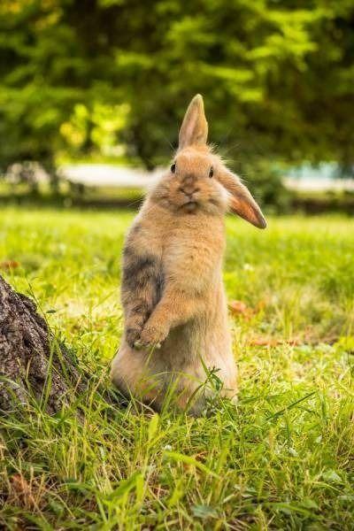 interested bunny listening