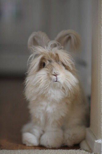 pretty bunny rabbit