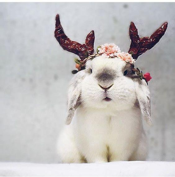 raindeer bunny