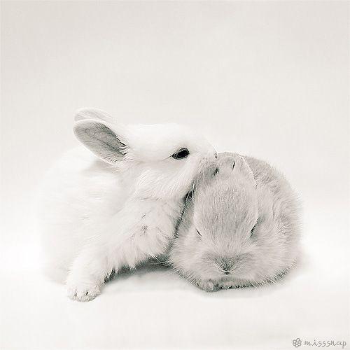 sleeping and kissing bunny