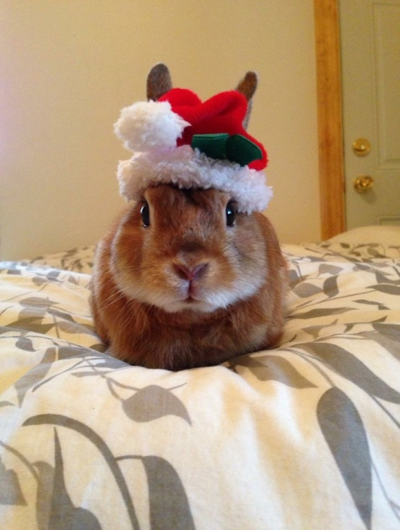 Trusia Rabbit in Santa costume