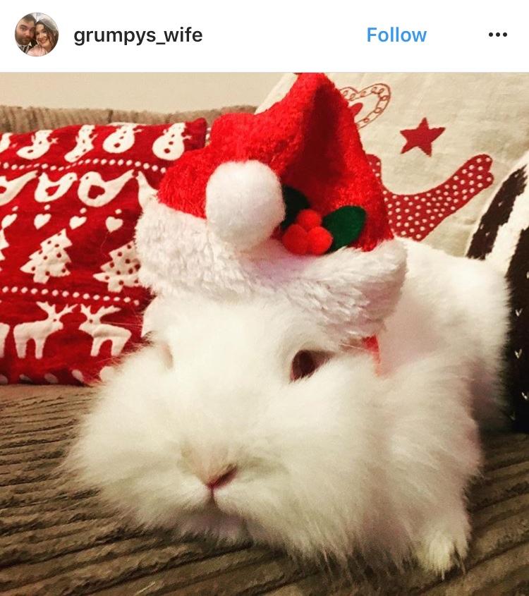 christmas_rabbit_santa hut_bunny_in the snow