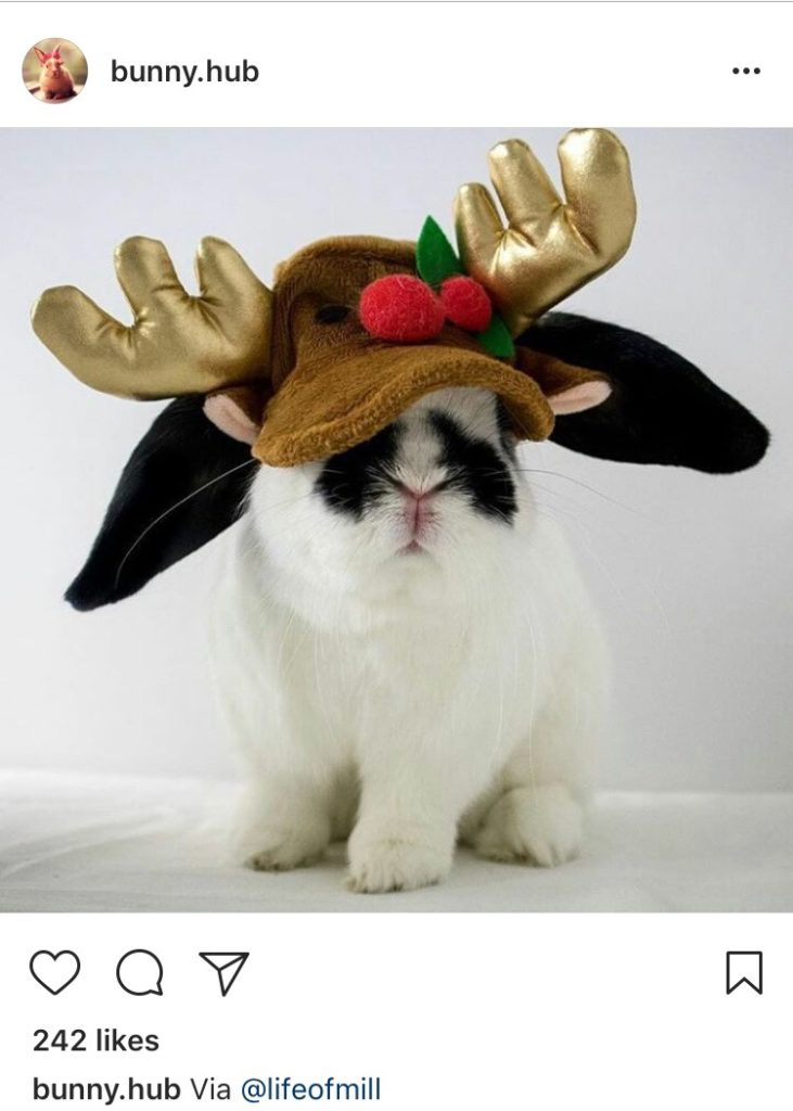 beautiful bunny in santa costume