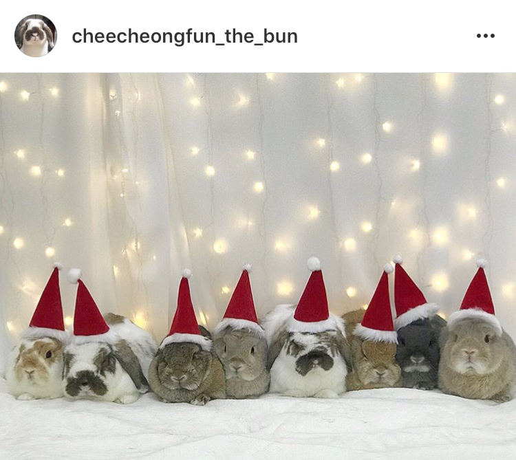 cute bunny rabbits in christmas costumes