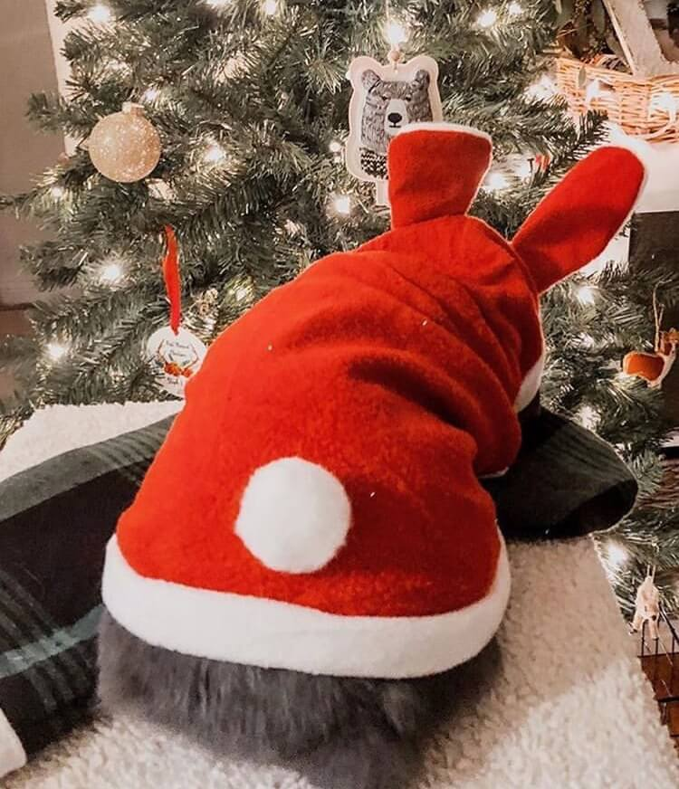 Bunny Rabbit beautiful photos. Everything you need to know about bunnies. Bunny kisses, bunny rabbit, bunny ears, bunny nose, bunny butt, bunny and people, bunny and kids, two bunnies, bunny love , cute bunnies, standing bunny, sleeping bunny, funny bunny photos, treat demanding bunnies, kroliczki, zajaczki, holland lops, bunny friends #snowbunny #winterbunny bunny in the snow