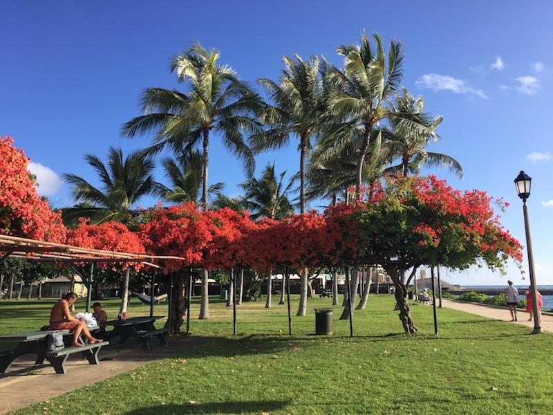 Waikiki red trees