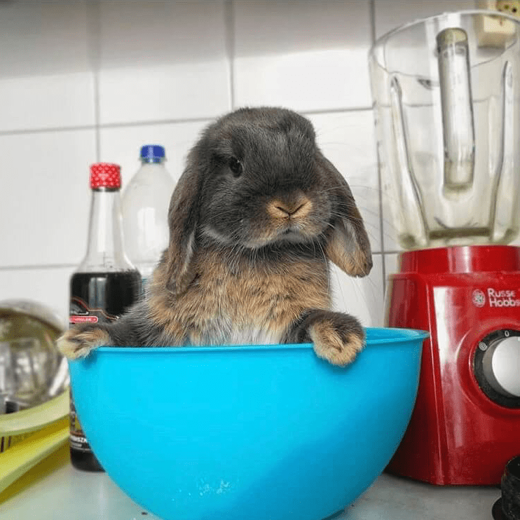 You could be surprised what to expect when living with a bunny