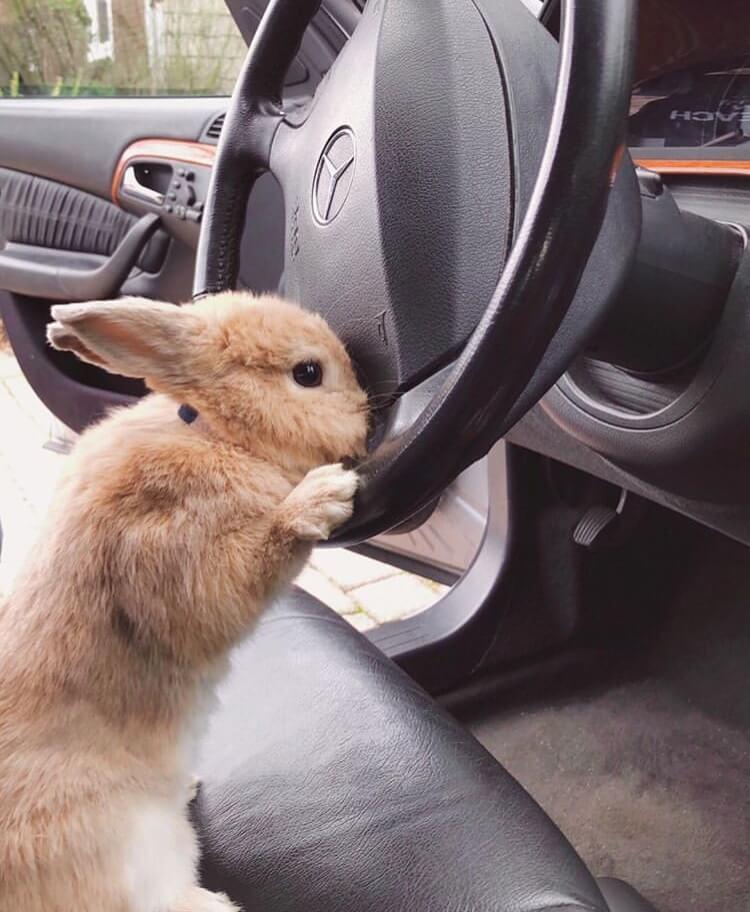 bunny car driver travel