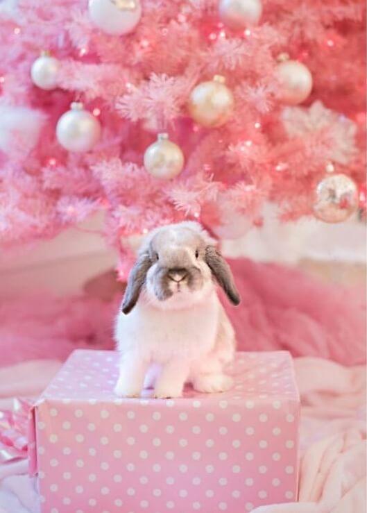 Bunny Rabbit beautiful photos. Everything you need to know about bunnies. Bunny kisses, bunny rabbit, bunny ears, bunny nose, bunny butt, bunny and people, bunny and kids, two bunnies, bunny love , cute bunnies, standing bunny, sleeping bunny, funny bunny photos, treat demanding bunnies, kroliczki, zajaczki, holland lops, bunny friends #rabbit #bunny #rabbitpictures