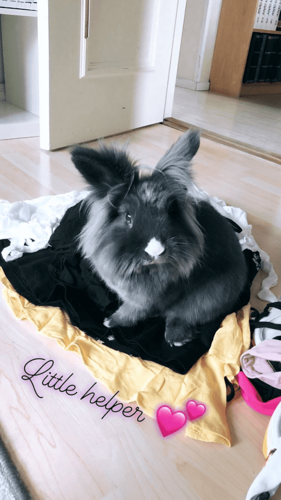 living with a bunny little helper