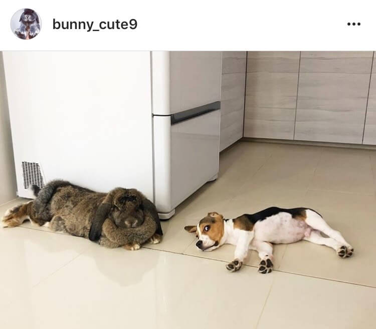 living with a bunny watching a dog