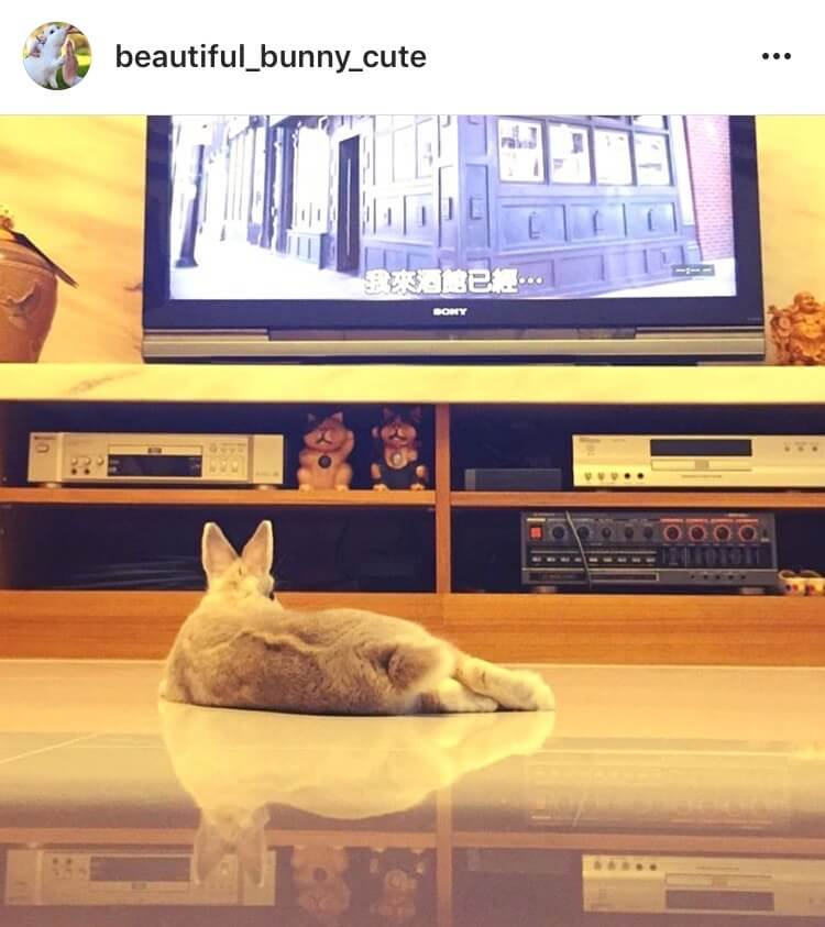 living with a bunny watching tv