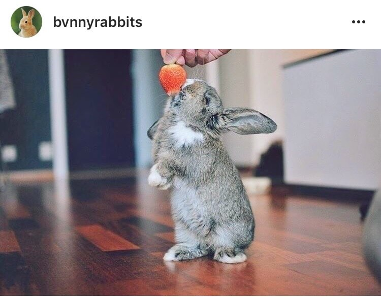 living with a bunny strawberry