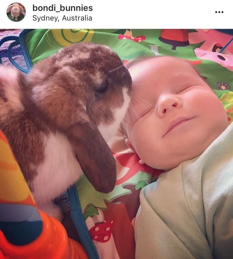 living with a bunny watching baby