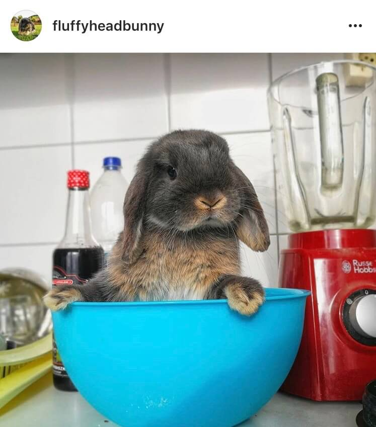 living with a bunny kitchen help