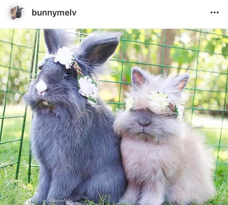living with a bunny rock your flower crown
