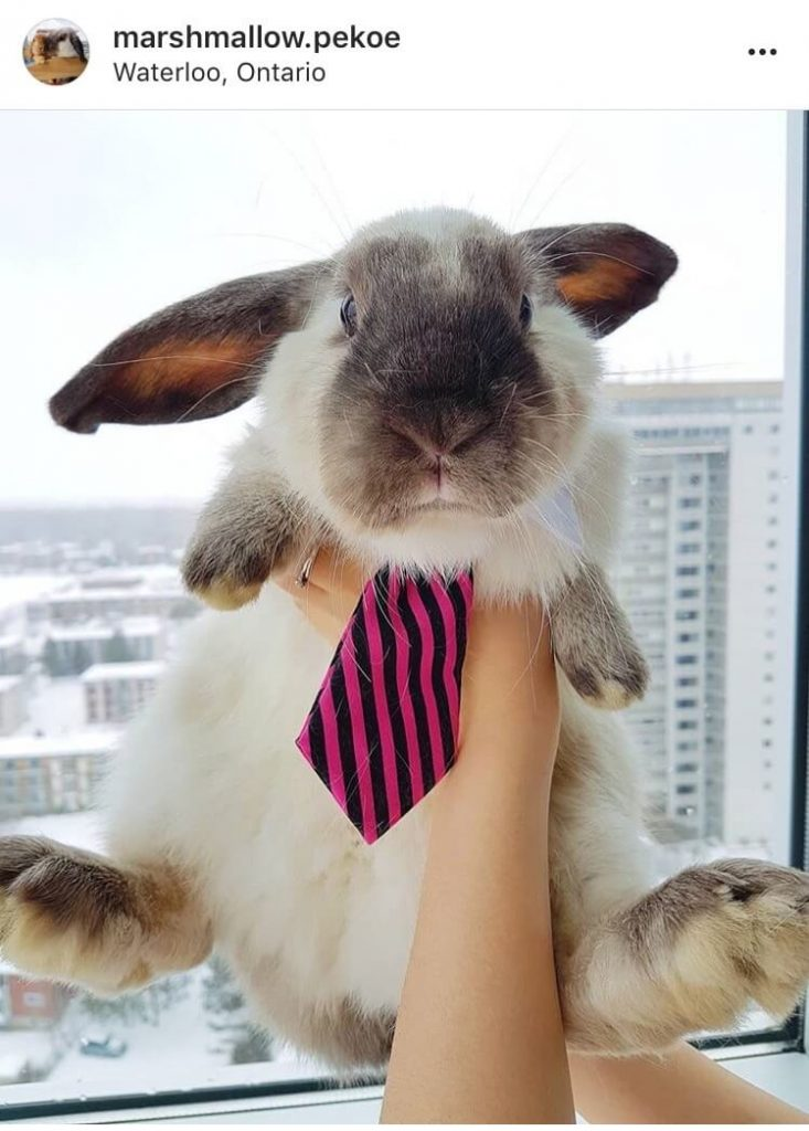 living with a bunny in a tie