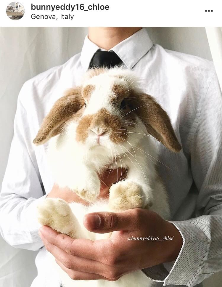 living with a bunny getting married