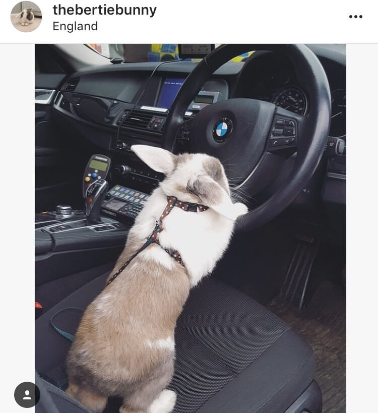 living with a bunny driver