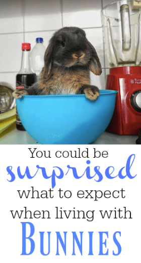 what to expect when living with bunnies - allthestufficareabout