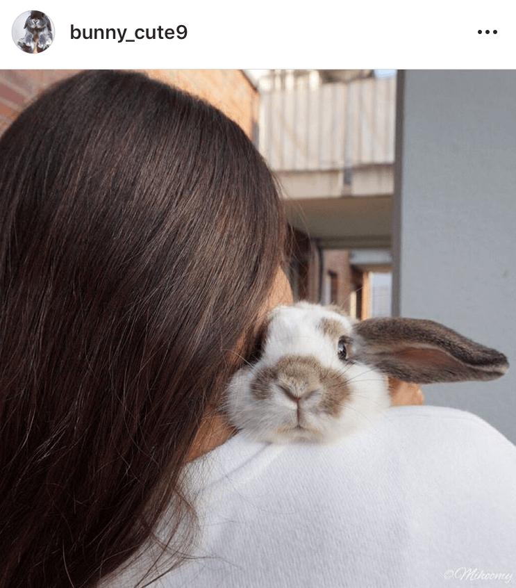 bunny mum bunny mama bunny mummy allthestufficareabout mihoomy
