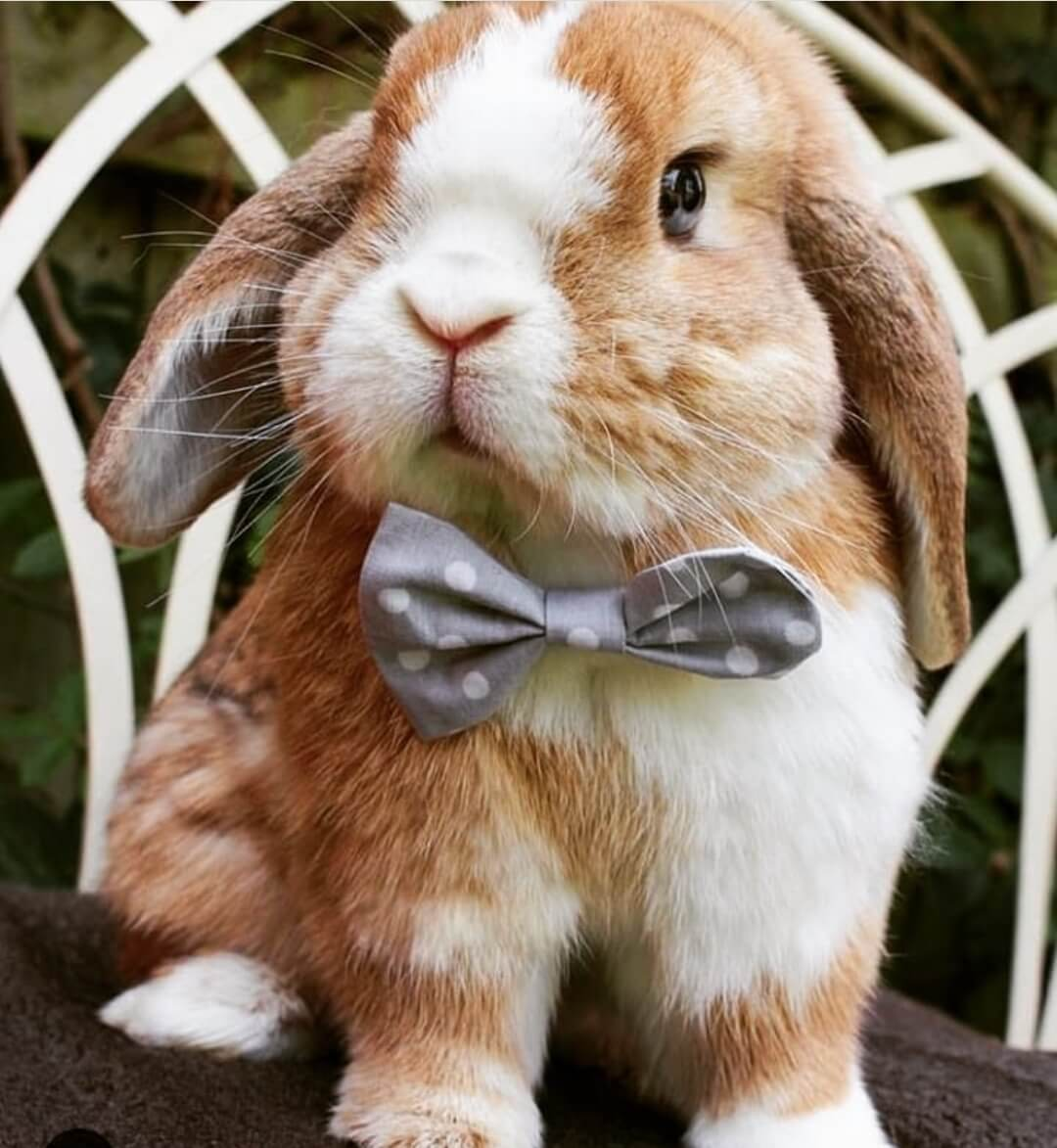 bunny cute funny bunnies allthestufficareabout today 1080 stuff care