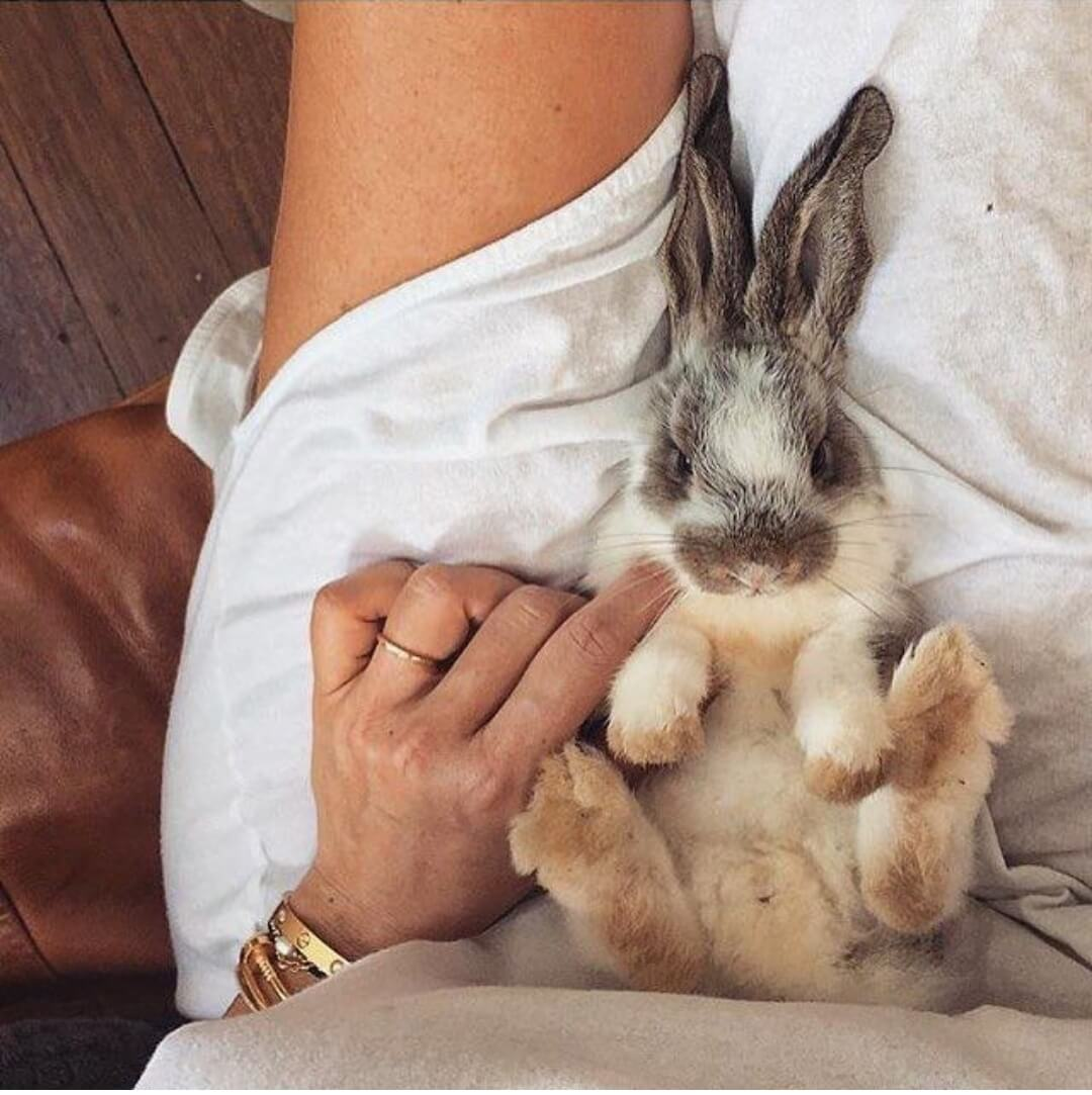 30 cute bunny pictures you have to see today ...