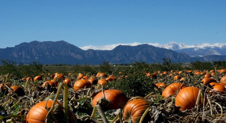 pumpkin patches near boulder