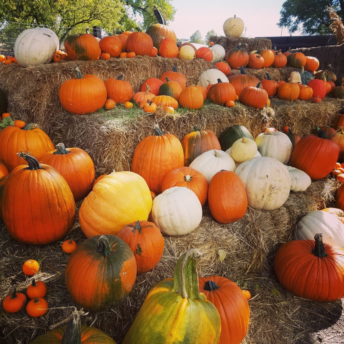 all things boulder pumpkin patches