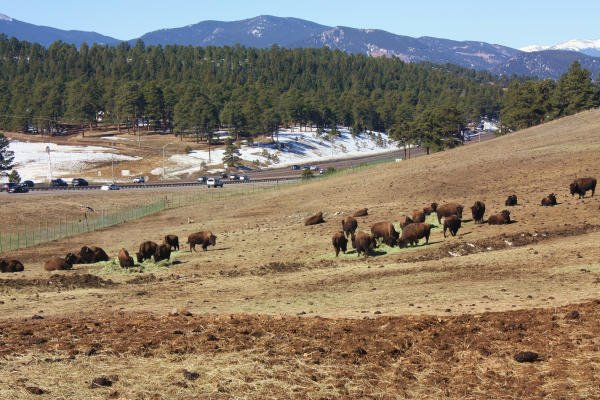 things to do in Colorado in 2021