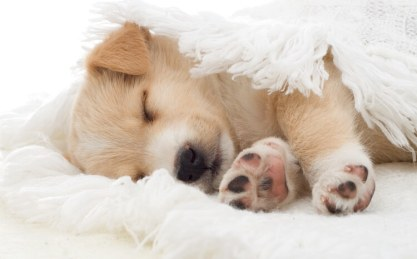How Much Do Puppies Sleep? The Puppy Sleep Calculator – All Things Dogs