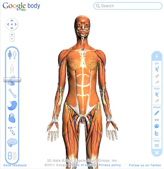 Human anatomy atlas online free
