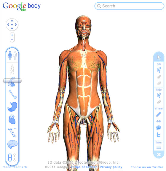 Free Interactive 3d Human Anatomy Atlases All Things Gym