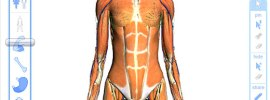 Free Interactive 3D Human Anatomy Atlases