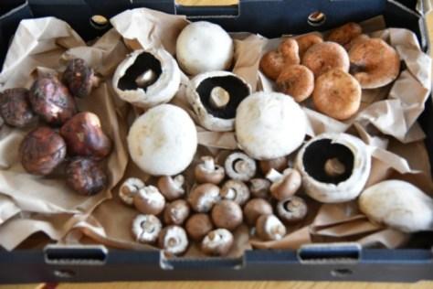 Mushroom box open_0269