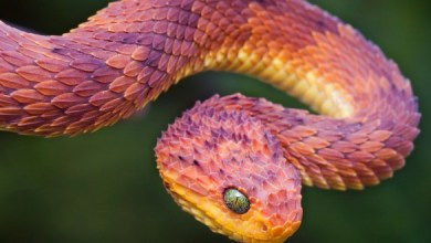 Photo of Top Ten Most Venomous/ Poisonous Snakes
