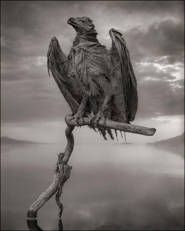 Calcified eagle