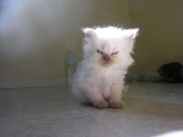 Disaffected Kitten