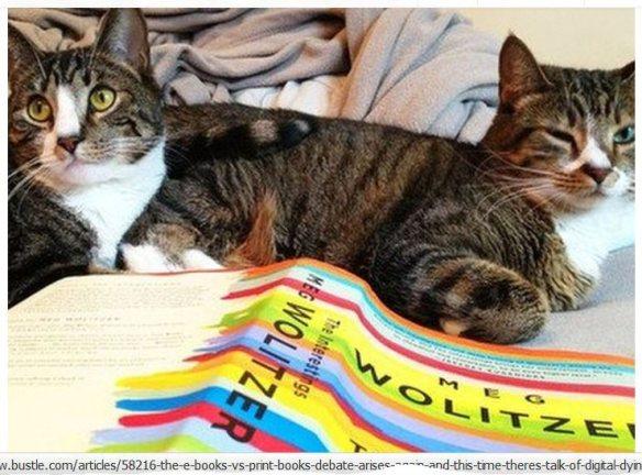 Cat friends