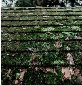 moss-covered roof photo