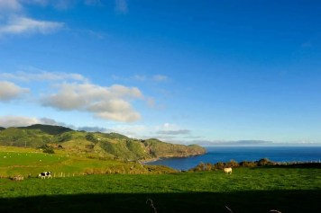 Vacas nos Açores