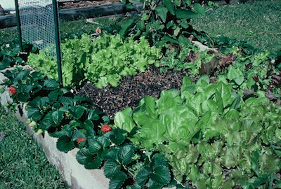 How To Build Cheap And Productive Raised Garden Beds The