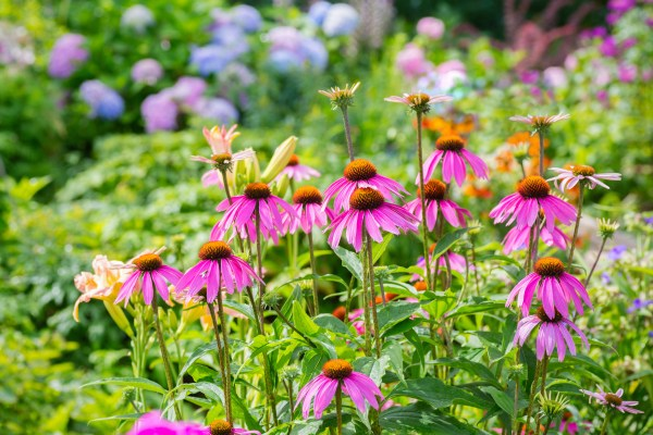 easiest perennials grow