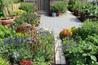 Edible Landscaping Plants Pictures   The Old Farmer's Almanac
