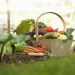 10 Tips For Beginner Gardeners The Old Farmer S Almanac