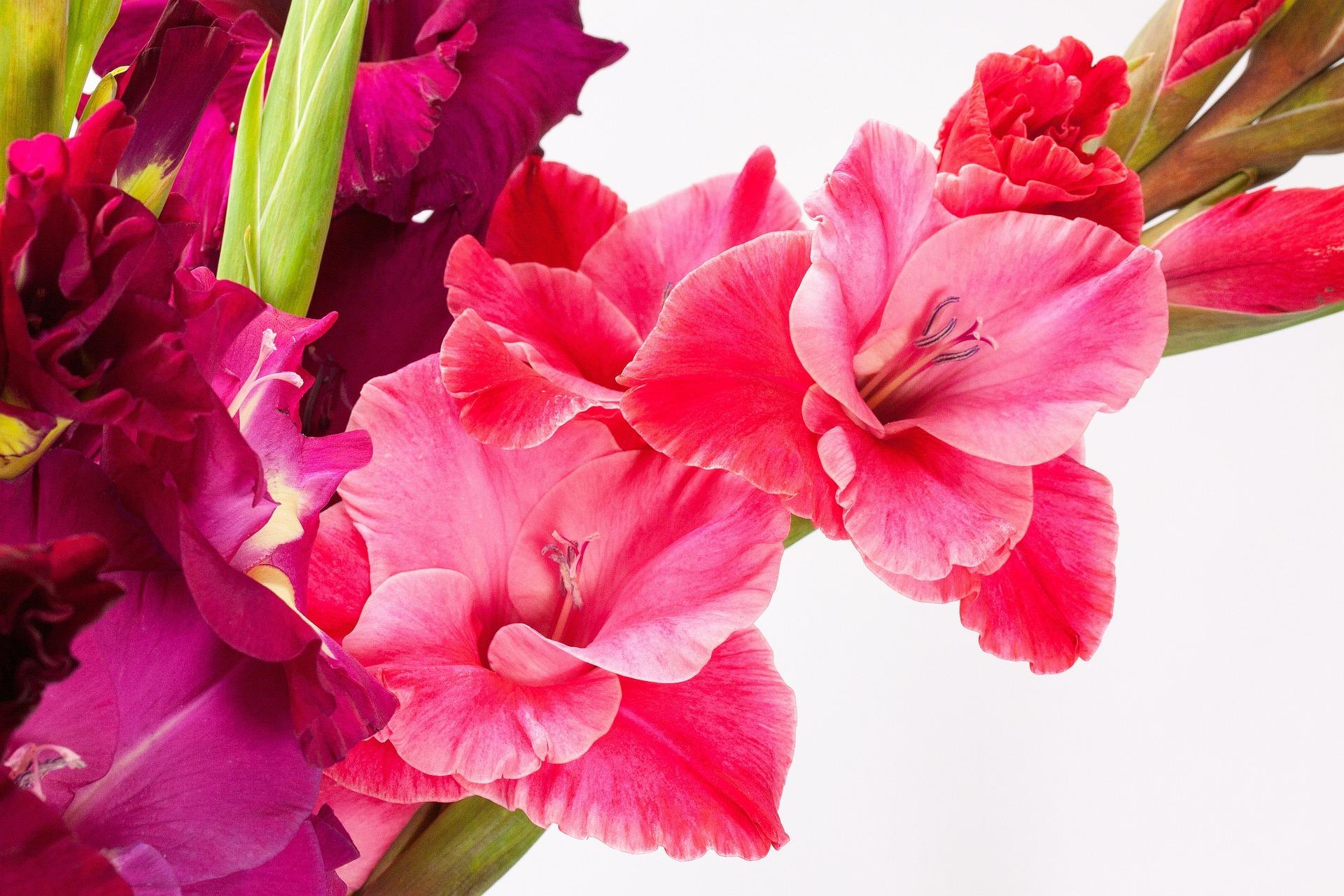 August Birth Flowers The Old Farmer39s Almanac